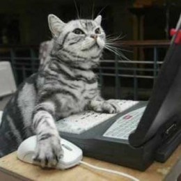 cat-at-laptop-275