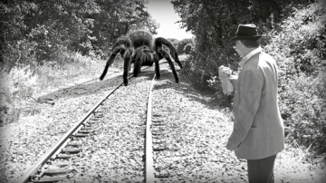 giant-spider02