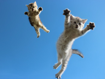 Flying-Cat-8