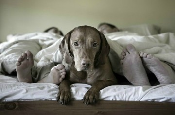 dog-on-bed-with-people-no-text-590x388