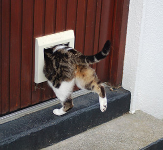 catflap-415px