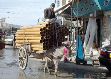 QUETTA, PAKISTAN, NOV 14: A labor dangerously travels on his overloaded donkey-cart  passes through a road which may cause of any serious accident needs the attention of concerned  department in Quetta on Monday, November 14, 2011. (Arsalan Naseer/PPI Images).